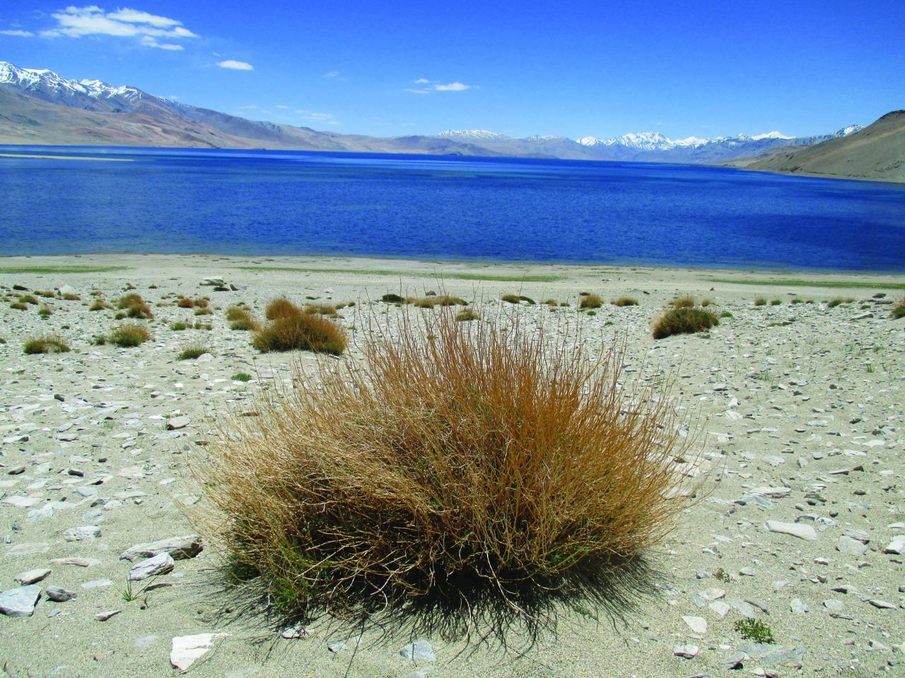 Озеро Цо-Морири, Северный Тибет