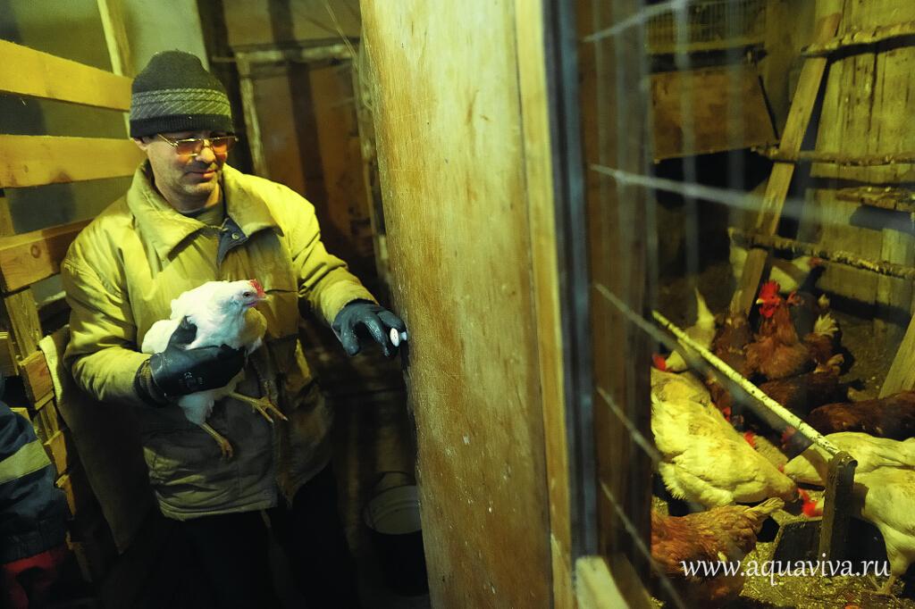 В хозяйстве реабилитационного центра несколько десятков кур