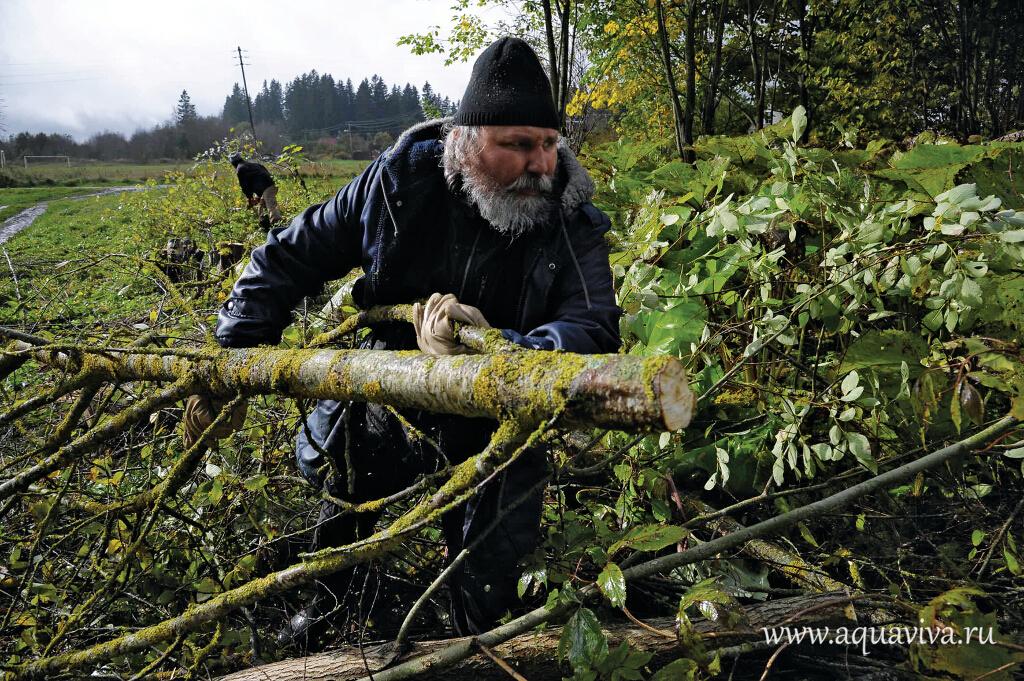 В едином порыве: одновременно волонтеры рубят деревья...