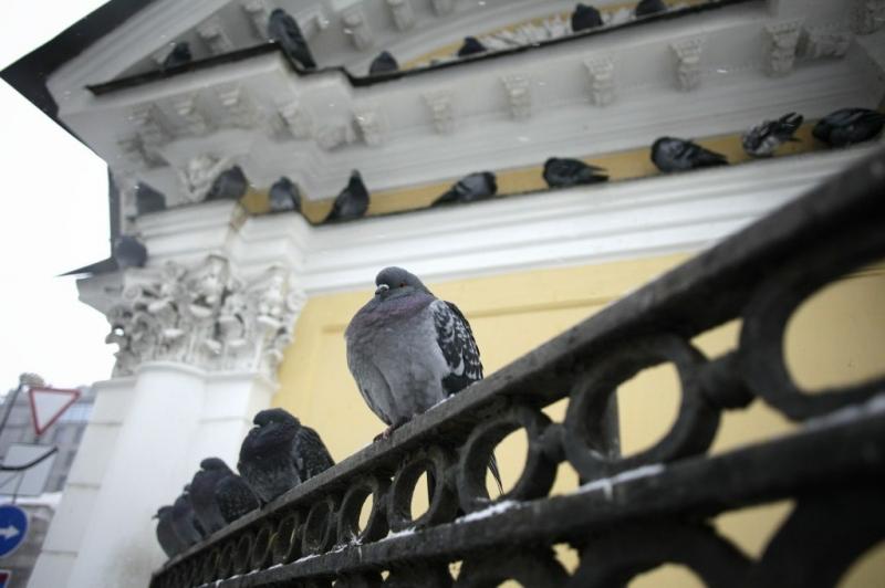 Фото Антона Ваганова