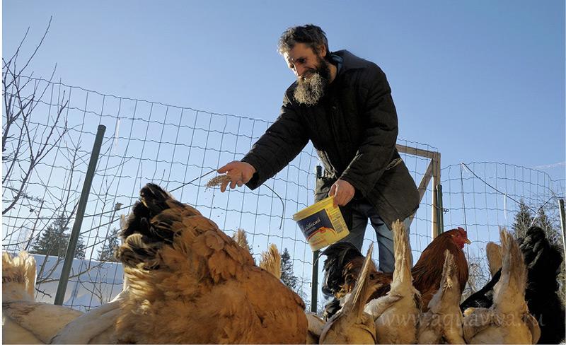 Забота о домашней птице входит в число семейных обязанностей отца Сергия