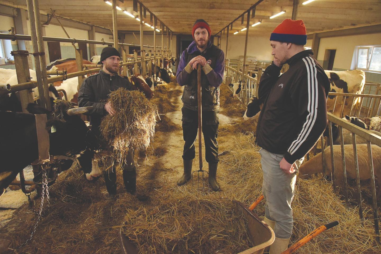 Труд на ферме предполагает готовность к ненормированному рабочему дню